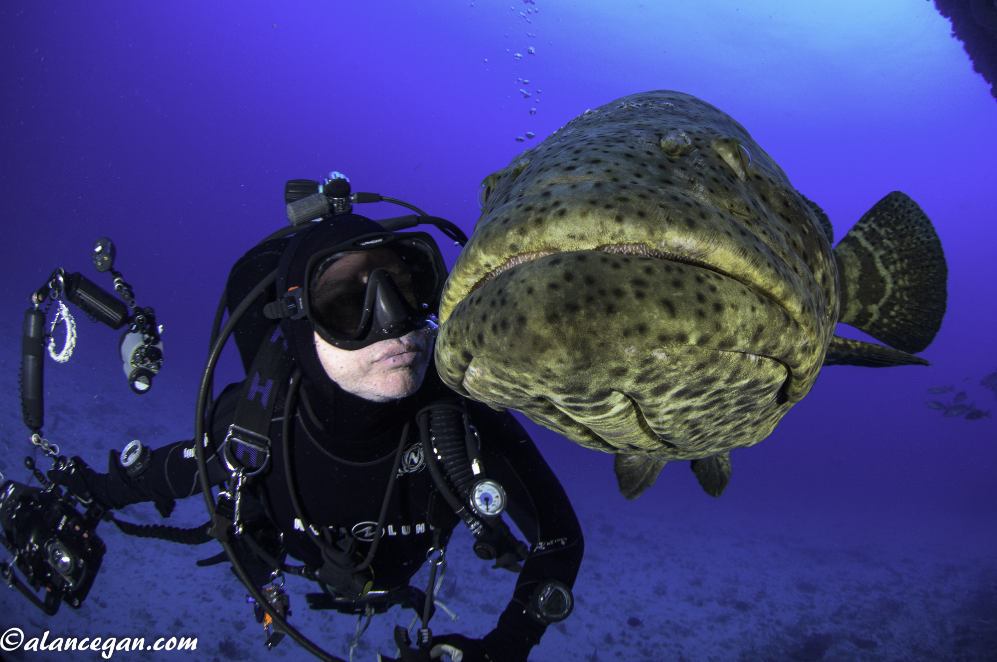 Kissing a Goliath Grouper off Boynton Beach Florida